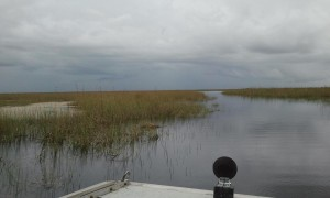 Cruising the Everglades. Click photo for full size.